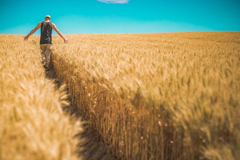 Nawozy organiczne – najlepsza alternatywa?